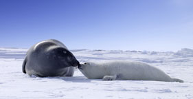 281x144_seal_and_pup_kiss_2.jpg